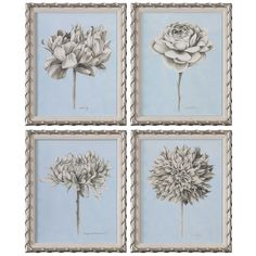 Uttermost Graphite Botanical Study Floral Prints Set Of 4
