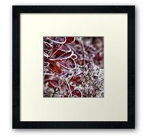 Frozen Bush Framed Print