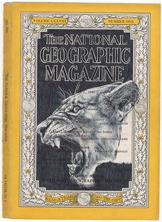 """Mark Powell """"National Geographic Lioness"""""""