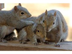 cute squirrels pictures | Cute Squirrels Click on this link to go back