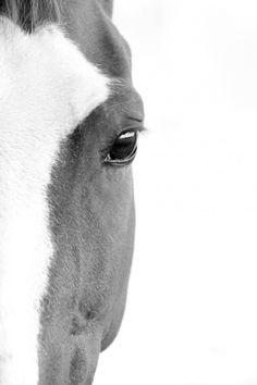 Photographies d'animaux (chevaux) (Gros plans) - LenaPhotographe