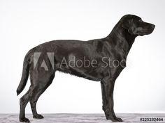 Side View, Dogs, Animals, Animales, Animaux, Pet Dogs, Doggies, Animal, Animais
