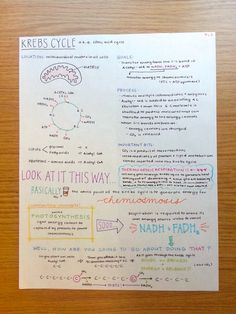 Kreb's cycle //PINTEREST: selinaa//♡