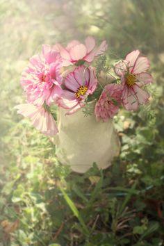 Bouquet_de_Cosmos