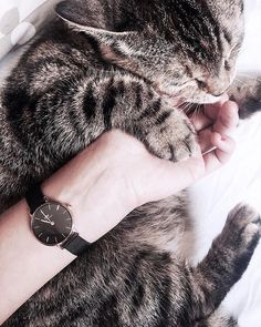We always have time for cat cuddles (shop the watch here). Cute Creatures, Beautiful Creatures, Crazy Cat Lady, Crazy Cats, I Love Cats, Cute Cats, Animals And Pets, Cute Animals, Fluffy Animals