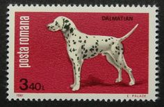 6249  Framed Postage Stamp Art  Dalmatian  by PassionGiftStampArt, $12.90