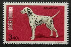 6249 Dalmatian enmarcado del arte del sello del franqueo