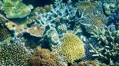 Coral @ Moore Reef