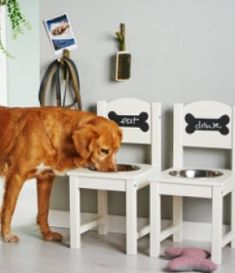YourHome - Projects - Create a stylish dog bowl for your beloved pooch