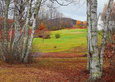 White Birches Rolling Green Lawn Bright Foliage And A Weird Beautiful Natural Red Field Route 17 Maine Greeting Card featuring the photograph Red Field by Expressionistart studio Priscilla Batzell