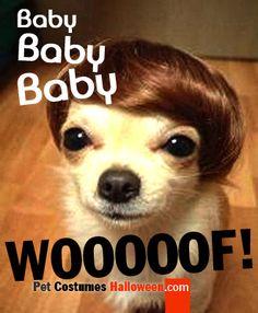 Bieber Dog
