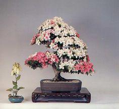 bonsai-art-amazing+%2821%29.jpg (500×459)