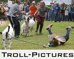 Googled goat race was not disappointed
