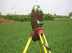A 'honey' of a set up. Land Surveyors, Means Of Communication, Science And Nature, Humor, World, Geo, Hamilton, Honey, Technology