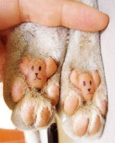 Drawing dogs on your cats paws??? Its cute, that's the weird part, huh....