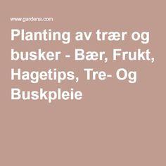Planting av trær og busker - Bær, Frukt, Hagetips, Tre- Og Buskpleie