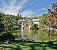Black Swan @ Palacio Cristal - - - #retiro #park #parque #lake #pond #swan #blackswan #green #vsco #vscogood #vscocam #snapseed #travel #wanderlust #citytrip #architecture #fountain #trees #sky #tvatravel #explore #walking #grass #madrid #spain