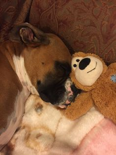 Cute Boxer Puppies, Boxer Dog Puppy, Cute Dogs, Dog Cat, Boxer And Baby, Boxer Love, Boxer Dogs Facts, Virtual Pet, Exotic Pets