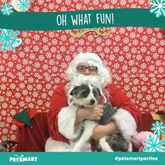 Here's my Pet Photo Pets, Summer, Fun, Summer Time, Animals And Pets, Hilarious