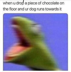 When u drOo a piece of chocolate on the floor and ur dog runs towards it - iFunny :)