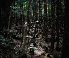 World's Creepiest Attractions: Aokigahara Forest, Japan