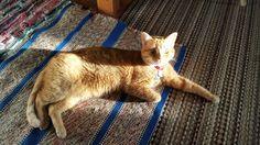 Sunbeam Kitteh #cat #kitty #kitten #orangetabby #domesticshorthair #sumbeam #chilling