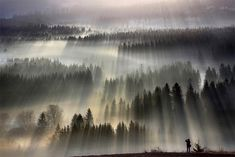 Photographs of light and fog streaming atop forests by Boguslaw Strempel