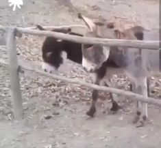 Smarter than the average Ass! - Horses Funny - Funny Horse Meme - - What a smart ass The post Smarter than the average Ass! appeared first on Gag Dad. Cute Animal Videos, Funny Animal Pictures, Cute Funny Animals, Cute Baby Animals, Funny Cute, Animals And Pets, Animal Antics, Animal Memes, Animals Beautiful