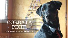 corbata de pixeles, perro, plantilla descargable. Labrador Retriever, Diy, Animals, Ties, Template, Plants, Labrador Retrievers, Animales, Bricolage