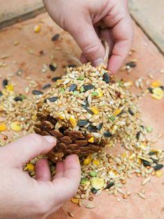 Roll Peanut Butter Filled Pinecone in Birdseed