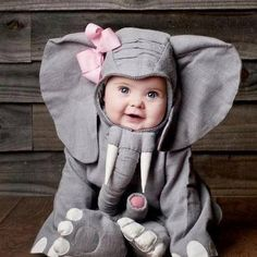 elefante #animal
