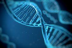 Un estudio publicado por PLOS Genetiscs ha revelado cuáles son los genes que dan forma a la cara. Esto podrá ayudar a detectar la causa de enfermedades relacionadas con nuestro rostro, como el labio leporino.