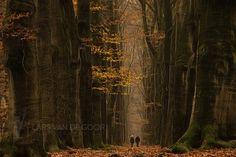 Photo to fall par Lars van de Goor on 500px