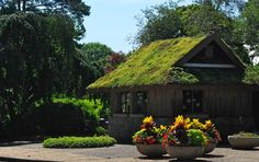 Green roof on a info building when we visited Norfolk Botanical Gardens in Norfolk Virginia Gardens Of The World, Norfolk Virginia, Living Roofs, Farm Barn, Public Garden, Unique Gardens, Garden Photos, Botanical Gardens, Exterior