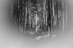 Już było: lasy koło Niska :)