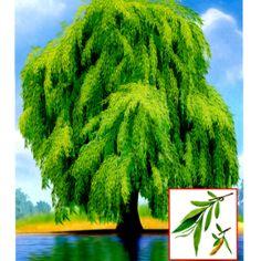 14 Autumn Nature, Montessori Materials, Elementary Science, Plantar, Nature Crafts, Autumn Theme, Card Games, Clip Art, Education