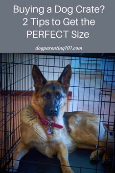 There are 2 things you need to know in order to buy the perfect size dog crate. Your dog's measurements and what you'll be using the crate for. #dogcrate #cratetraining #dogproducts Dog Training Tools, Online Dog Training, Crate Training, Training Your Dog, Agility Training, Dog Agility, Puppy Care, Pet Care, Dog Crate Sizes