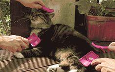 gato-mais-feliz-do-mundo