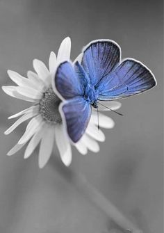 Black and white with blue manipulation....pretty!