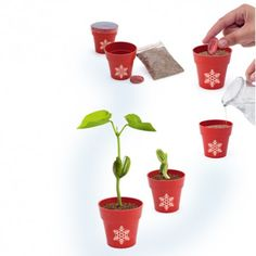 MACETA publicitaria PETRIS* personalizada con el logo de tu empresa. Christmas Is Coming, Planter Pots, Gifts, Corporate Gifts, Christmas Themes, Plant Pots, Xmas, Presents