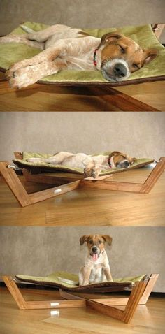 Stylish bed for dog- Madison would love this but then Gordo would kick her out!