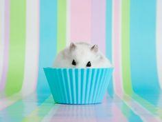in een cupcake bakje