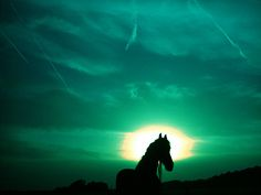 .    horse at green sunset (by serni)
