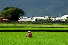 Chishang Rice Field, Taitung County
