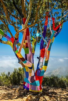 Now that's a colorful tree....