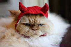 pet hat - devil. $32.00, via Etsy.