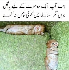 Love Song Quotes, Funny Girl Quotes, Crazy Funny Memes, Hazrat Ali Sayings, Crazy Feeling, Cat Activity, Urdu Love Words, Funny Jokes For Adults, Cute Love Songs