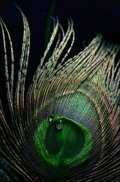 Peacock feather by Veronica Andre Ganesh Images, Lord Krishna Images, Feather Art, Peacock Feathers, Bright Colors Art, Peacock Pictures, Feather Wallpaper, Veronica, Feather Photography