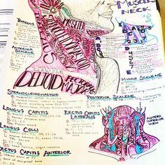 #neckmuscles #neckanatomy #anatomy #medschool #smartwork #knowlegdeispower