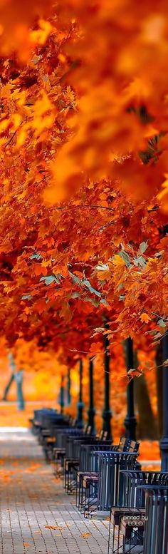 Ѽ autumn delights Ѽ  ❤ Colors of fall |autumn Day